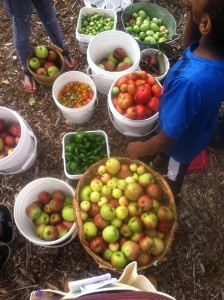 king-elementary-harvest-garden-foodcorps-des-moines