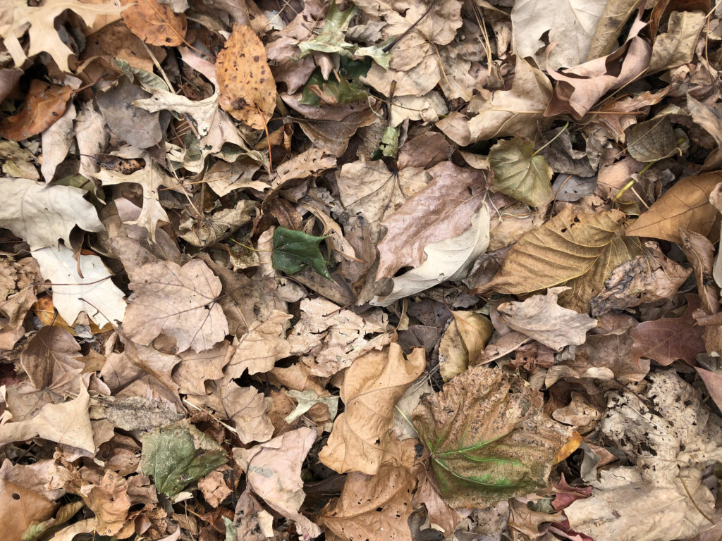 leaves fall